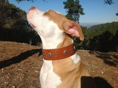 Leather dog collar by kingstreetcollars on Etsy, $40.00