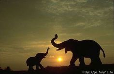 mom and baby elephant at sunset