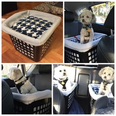 DIY dog booster seat for the car. Cut out two bigger holes in the back for the seat belt to go through and tie a leash to the top. Sew a cube shaped pillow for the interior and a slip cover with elastic for the top (for ease of cleaning) and you're set! Straps in your dog for safety and allows them to see it the window, preventing car sickness.