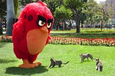 LIMA VAGA: Fotos: Red de Angry Birds estuvo paseando por Lima...