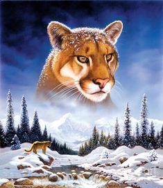 Mountain Lion Photograph  - Mountain Lion Fine Art Print - by Chris Heitt