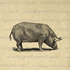 Pig Graphic Image Download Illustration Printable Digital Antique Clip Art for Transfers Making Prints etc HQ 300dpi No.3141