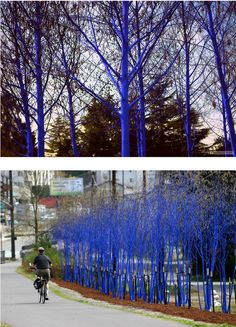 Egyptian sculptor Konstantin Dimopoulos used a biologically safe blue pigment to color the trees in Melbourne, Australia