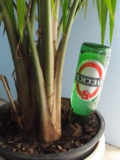 "How to keep your plants alive while on vacation: Use old bottles as ""aqua globes"" for watering your plants - GENIUS!"