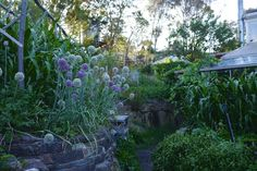 """""""Visiting Melliodora[, in Australian region,] in a Dry Year January 25, 2016 