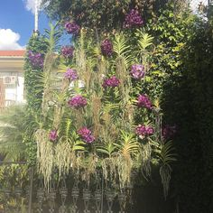 """Mais uma dos """"modernos e eternos"""" mais uma da natureza simplesmente lindo!!! @ modernoseeternos @josettedavis @kikagontijo"""