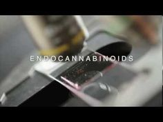 Dr. Sanchez's endocannabinoid system research led to Findings: THC *CURES* Cancer #herbal