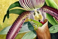 frog, green tree frog, orchids, lady slipper orchid