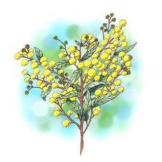 Wattle Tree Flower Digi Stamp in Digital images