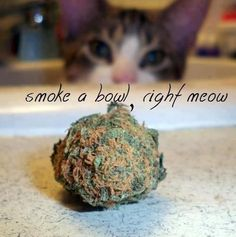smoking RIGHT MEOW ( marijuana cannabis )