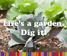 Life's a garden, dig it! #tuin #quote