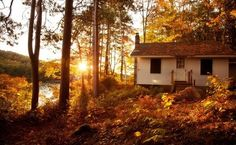 Immagine di house, autumn, and nature