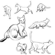 Gatos para dibujar 5 Cat Reference, Drawing Reference, Cat Anatomy, Cat Whisperer, F2 Savannah Cat, Cat Pose, Cat Drawing, Drawing Tips, Drawing Tutorials
