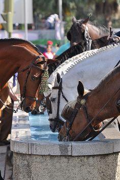 Feria de Sevilla    Los caballos también beben Spain, by FJ. Jiménez,