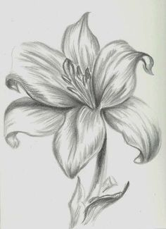 The best Pencil drawings ideas Easy Flower Drawings, Pencil Drawings Of Flowers, Pencil Drawing Tutorials, Pencil Shading, Flower Sketches, Pencil Art Drawings, Art Drawings Sketches, Cool Drawings, Drawing Flowers