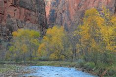 The Virgin River along the Riverside trail from the Temple of Sinawava. Fall - which in Zion Canyon peaks around the end of October or first week of November - is a beautiful time to visit the park. #CML