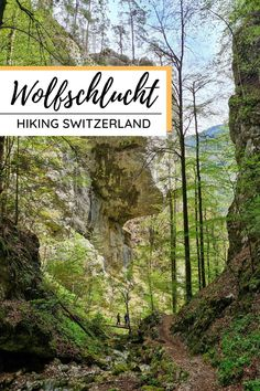 Hike up to an enormous cave in the side of a cliff wall with a view, then ramble down a beautiful forested gorge in northern Switzerland. Only 4 km long, so a good choice for casual hikers and families that want a little adventure. Hiking Europe, Switzerland, Cave, Wolf, Caves, Wolves, Timber Wolf
