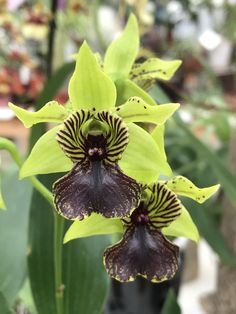 AppalachianTropicals (@AppTropicals) | Twitter Dendrobium Orchids, Cool Pictures, Succulents, Twitter, Plants, Flowers, Orchids, Succulent Plants