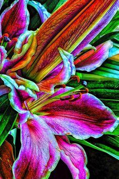 Stargazer lilies                                                                                                                                                      More