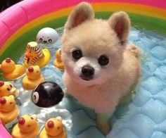 PetsLady's Pick: Cute Summer Dog Of The Day