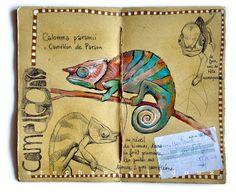 Carnet de voyage à Madagascar Stephanie Ledoux   animaux ss différents angles et techniques