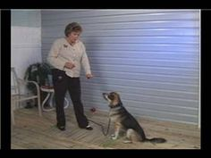 Hand signals for dogs are a great way to add visual cues to his training. Learn which top 8 hand signals to teach your dog (including deaf ones)! Dog Training Methods, Basic Dog Training, Dog Training Techniques, Training Your Puppy, Training Dogs, Black Boxer Puppies, Boxer Dogs, Boxers, Doggies