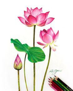 Watercolor Lotus, Lotus Painting, Watercolor Artwork, Watercolor Flowers, Lotus Drawing, Lotus Art, Colorful Drawings, Easy Drawings, Drawings With Colored Pencils