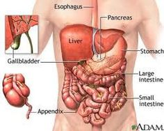 Liver and gallbladder cleanse part 2 gall bladder health liver and gallbladder cleanse part 2 gall bladder health gallbladder and kidney gallbladder liver enzymes liver detoxifying what is gall bladder human ccuart Choice Image
