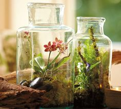 Need some giant antique pickling jars...  Orchid Terrariums