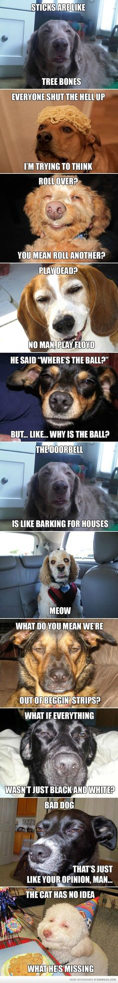 Dogs That Are As High As A Kite