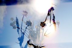 California Collection Two, Print 5 by Kelly Lynn Jones