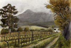 Buitenverwachting Manor - Chalk pastel and charcoal on paper. 210 x 297 mm. I drew this in Autumn, standing in the Sauvignon Blanc vineyard in front of the Buitenverwachting Manor House. The vines had gone through their first stage pruning. The clouds were descending characteristically over the face of the mountain on this cold Constantia day. Fires have since burned all the pine forests on the mountain away.