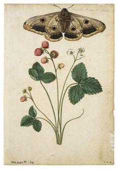 EL JARDIN DE LOS MUFFINS: Blog de Decoración, Vintage y Tendencias: Decorar con Láminas de Botánica Vintage