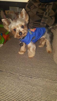 Hello everyone I'm Teddy!