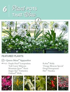 Plant Pots that Wow! Try these selections and enjoy the 'oohs and ahs'!