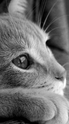 Always thinking can't help it 😽 - Cat Photography Pretty Cats, Beautiful Cats, Animals Beautiful, Cute Animals, Cute Kittens, Cats And Kittens, Crazy Cat Lady, Crazy Cats, I Love Cats