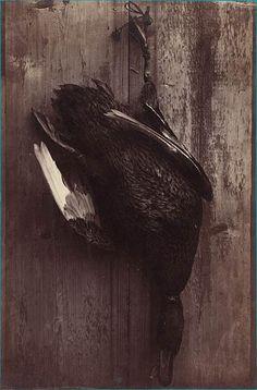 Arthur Bolotte Canard 1864 (ca) Tirage sur papier albuminé d'après négatif sur verre au collodion.