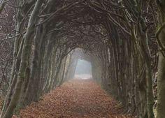Dark tunnel of trees - Nedderland  SanderStock/Getty Images