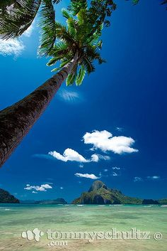 Palawan tropical island (Cadlao) framed by a palm tree against a background of blue sky and blue water. Travel photography of El Nido, Palawan in the Philippines.    Click here to see more El Nido pictures.    You can also download free Palawan iPhone an . Wow Picture!!!