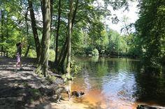 Bekijk alle 129 foto's van dit losloopgebied en ga heerlijk wandelen met uw hond in de mooiste losloopgebieden van Nederland!