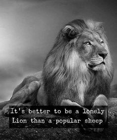 Lion quotes - It's not always the best but it's so ! Wisdom Quotes, True Quotes, Great Quotes, Motivational Quotes, Inspirational Quotes, Qoutes, Quotes Quotes, Citation Lion, Lion Quotes