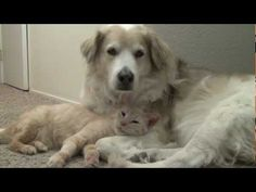 Rescue cat loves his new canine sister.