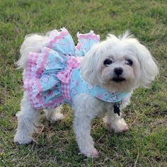 Artículos similares a Dog Dress, Custom Made for the Easter Holiday: Harness Ruffle Dress Features a Polka Dot Print on Pink Background with Lace and Beads en Etsy Cute Dog Harness, Cat Harness, Small Dog Clothes, Pet Clothes, Dog Clothing, Mothers Day Dresses, Dog Clothes Patterns, Designer Dog Clothes, Malteser