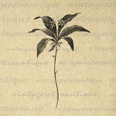 Digital Printable Wintergreen Star Flower by VintageRetroAntique, $3.50