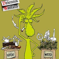koniec dyskryminacji narkotyków - http://www.augustynski.eu/koniec-dyskryminacji-narkotykow/