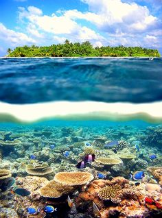 Split-View Coral Reef, Tahiti