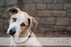 Here are tips on working with dogs and their owners to capture amazing portraits.