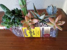 Jose Cuervo Tequila Bottle Planter, snack bowl, candy dish / by #LookingSharpCactus on Etsy