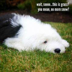 wait, soooo...this is grass? you mean, no more snow?