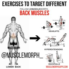 BACK EXERCISE MUSCLEMORPH https://musclemorphsupps.com/